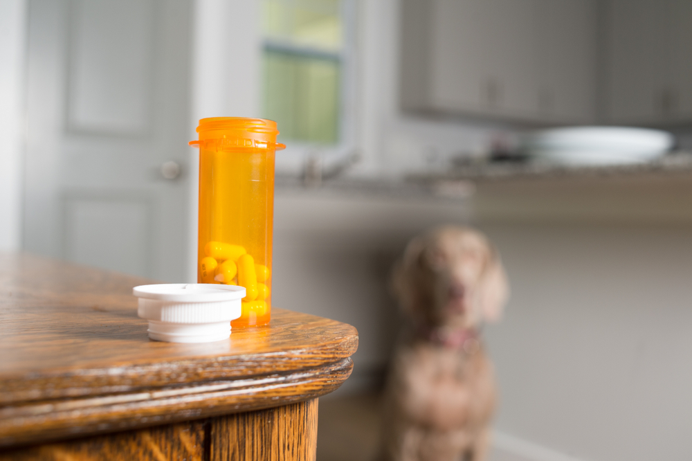 Medication for valley fever in dogs